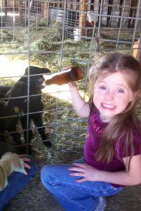 bottlefeeding-lambs