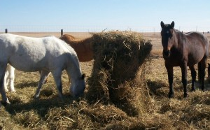 puppy-and-horses-041